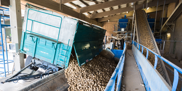 Tolls Fließband Kartoffeln